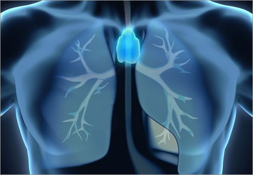 glandula de timo